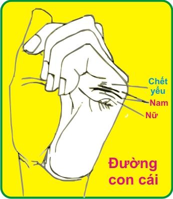 Đường con cái của bạn được tiết lộ ở dưới ngón áp úp bàn tay phải