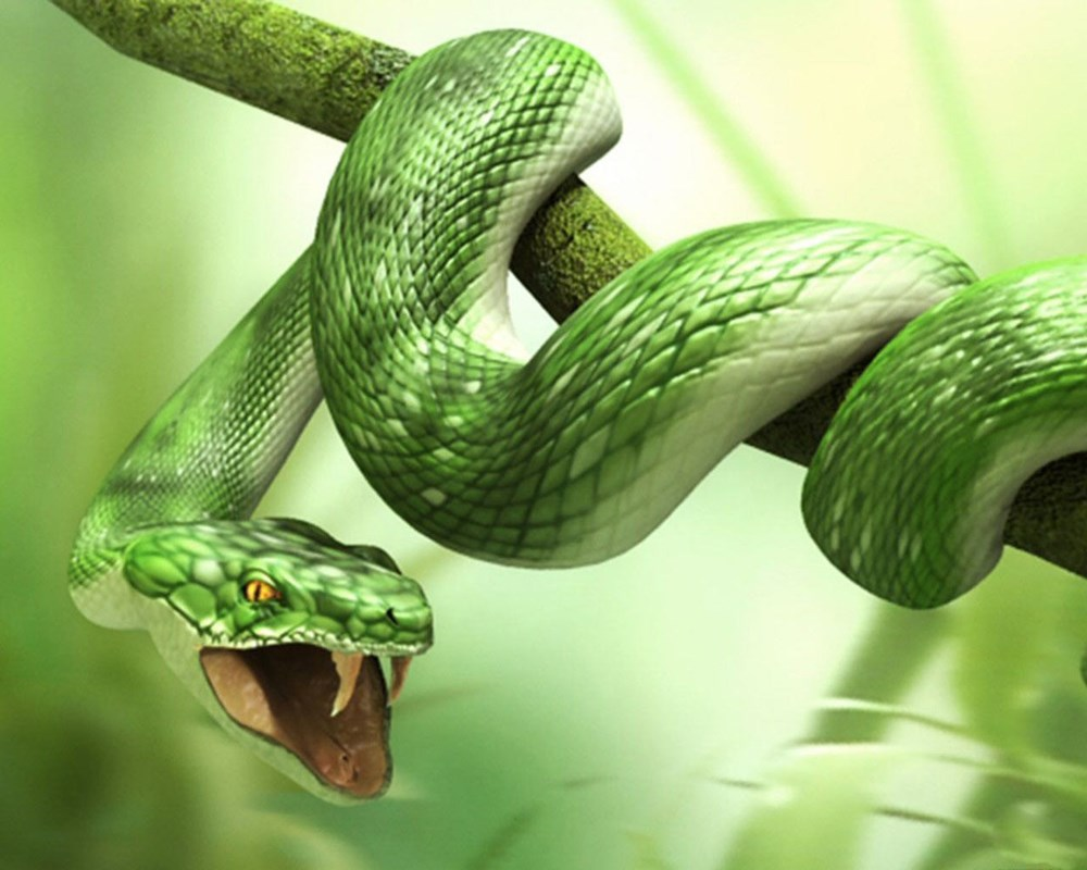 Giải mã nằm mơ thấy hai con rắn