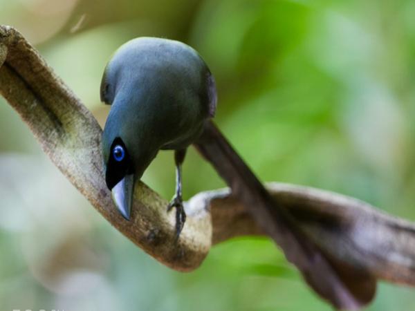Nằm mơ thấy chim khách chơi xổ số con gì may mắn