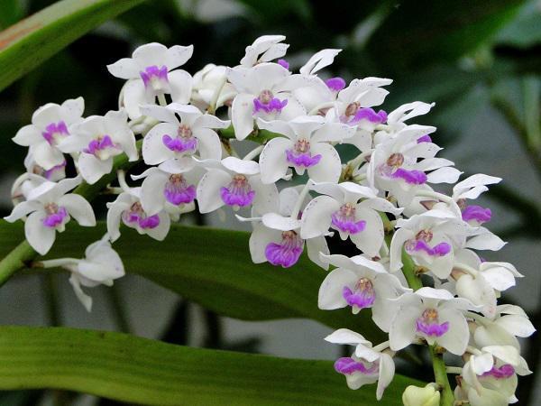Nằm mơ thấy hoa lan nở có điềm báo gì đặc biệt