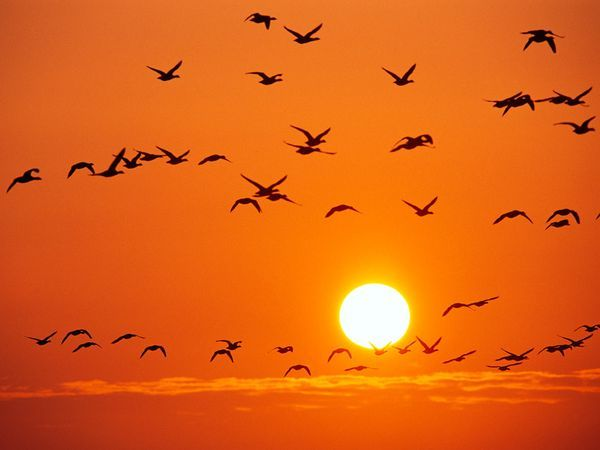 Mơ thấy mặt trời là điềm báo điều gì?