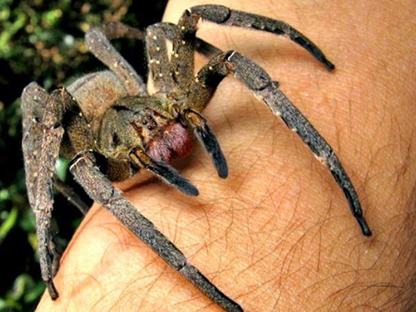 Mơ thấy nhện giải xui ngay bằng cặp lô nào? Là điềm gì?