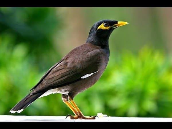Nằm mơ thấy con chim đánh xổ số con gì dễ trúng