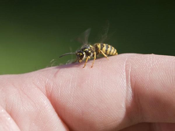 Mơ thấy bị ong đốt điềm báo gì?